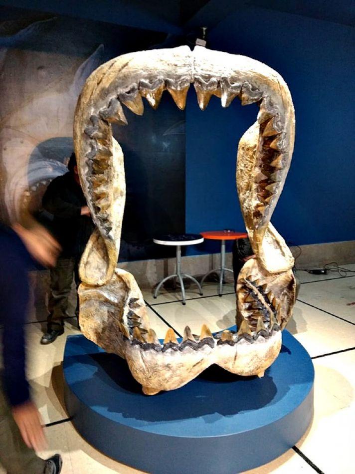 Dentadura de un tiburón gigante.